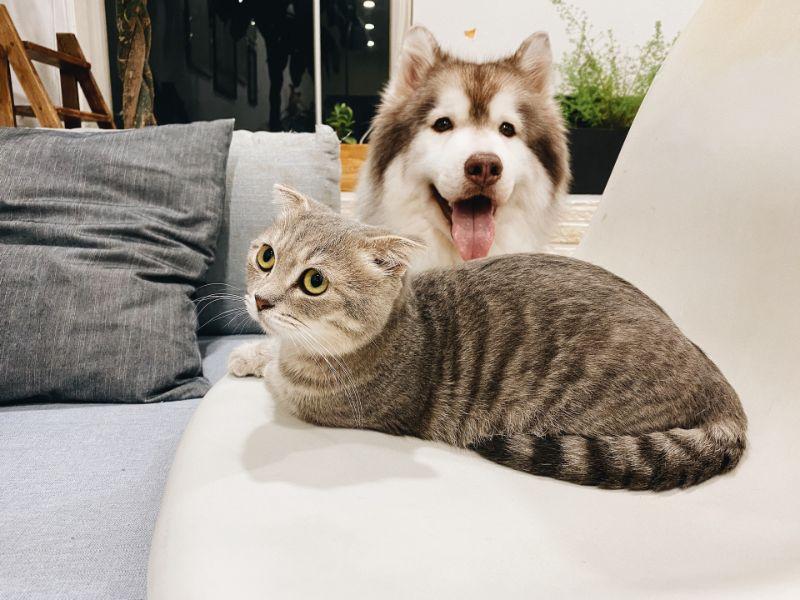 Katze und Hund auf dem Sofa