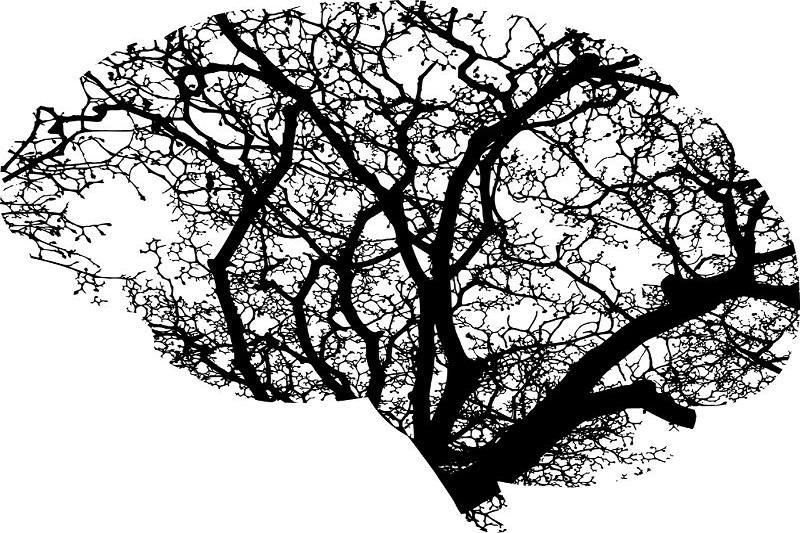 Gehirnanatomie-abstrakt
