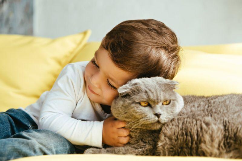 Gluckliches-Kleinkind-das-schottische-Falzkatze-auf-Sofa-zu-Hause-umarmt