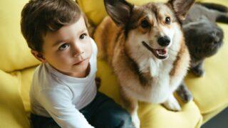 Kleiner Junge, der auf Sofa mit Katze und walisischem Corgi-Hund sitzt