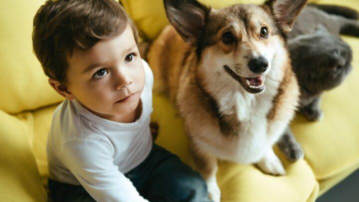 Haustiere Für Kinder: So Wählen Sie Ihren Neun Mitbewohner