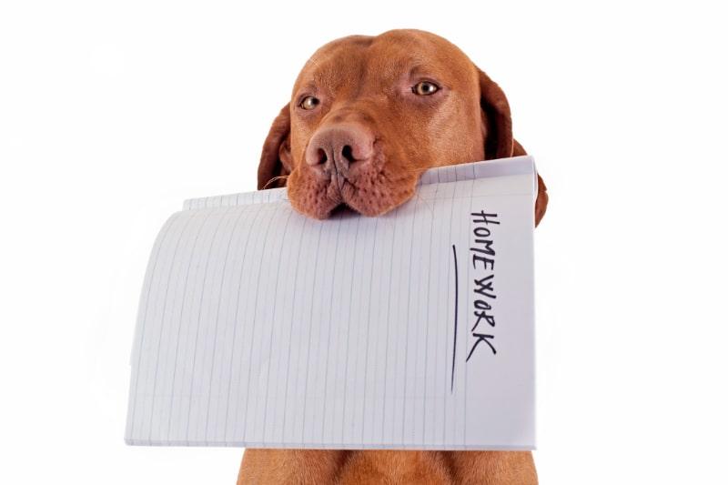 Der-Hund-hat-meine-Hausaufgaben-gefressen