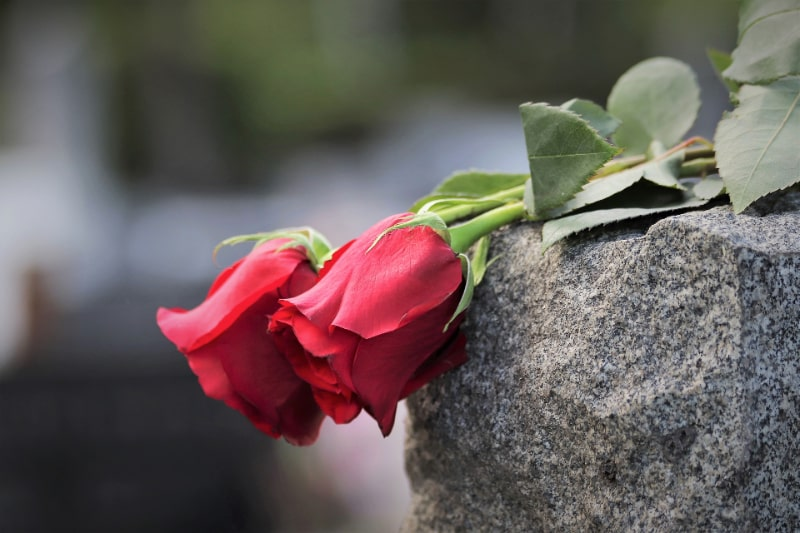 zwei-rote-Rosen-auf-einem-Stein