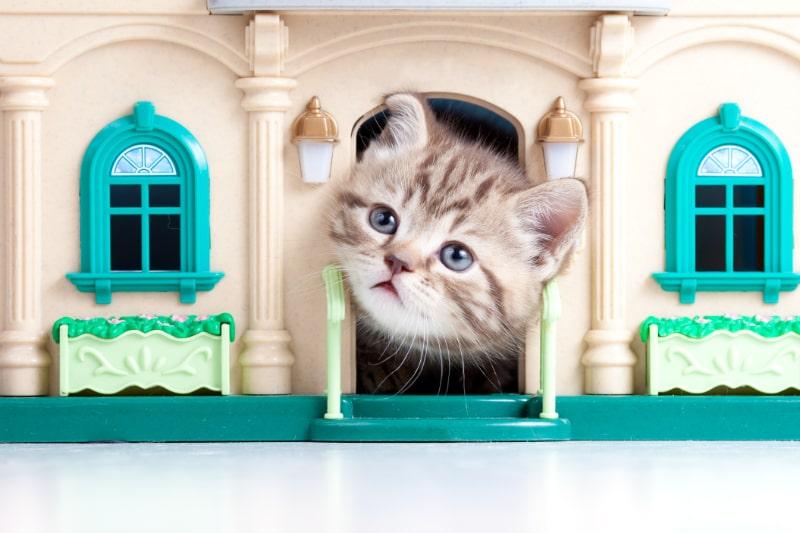 Nettes-Katzchen-das-auf-Spielzeughaus-schaut