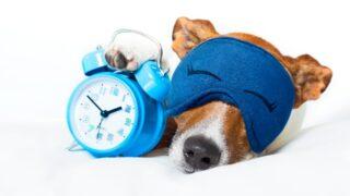 Hund schläft mit Uhr